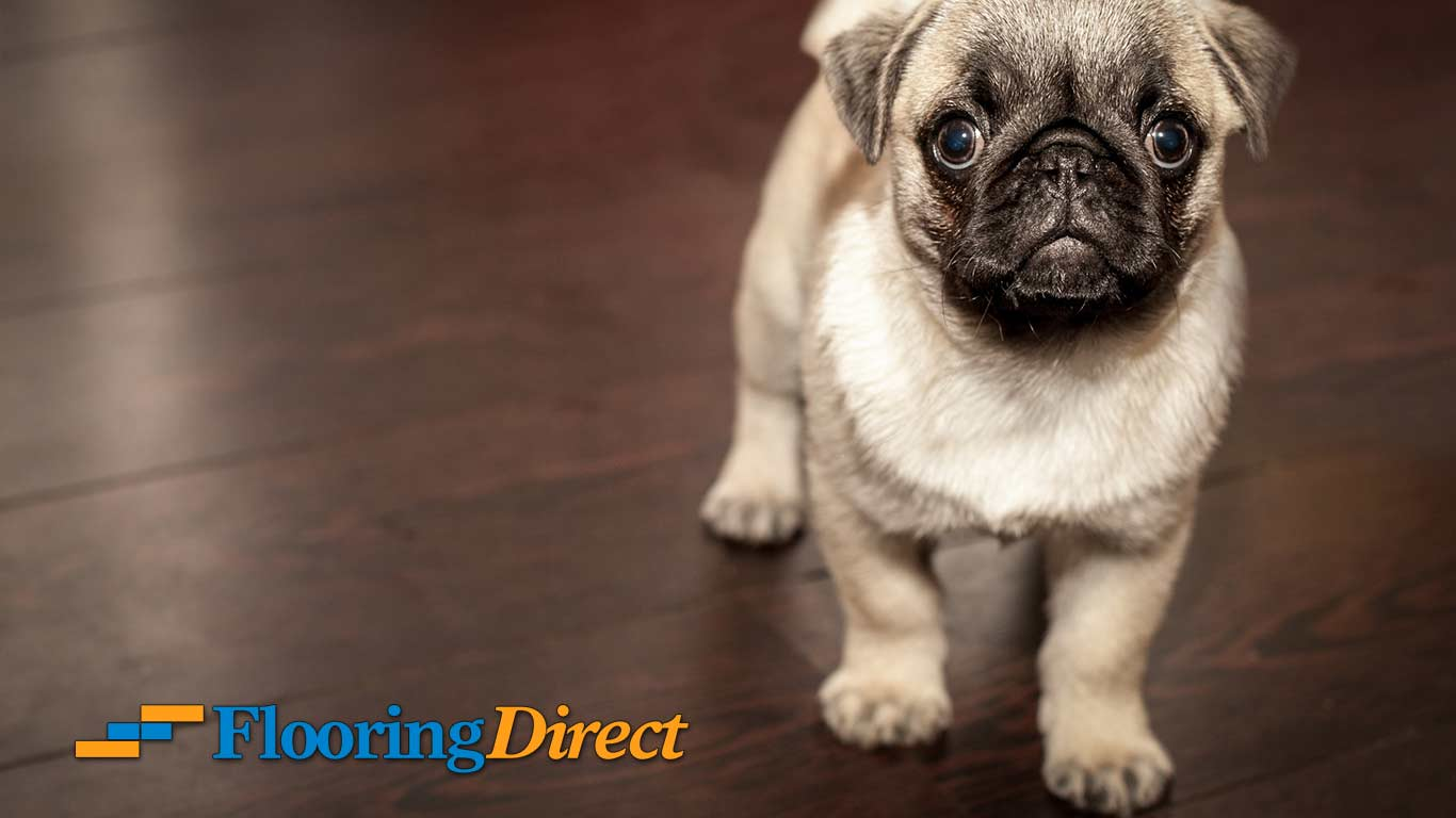 Just Imagine How Much Cuter Your Pet Will Look On Brand New Flooring