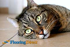 Cool Cat on a Tile Floor at Flooring Direct