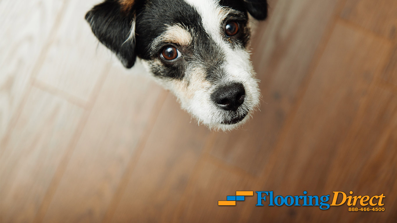 Wood-Look Flooring Pet-Safe At Flooring Direct