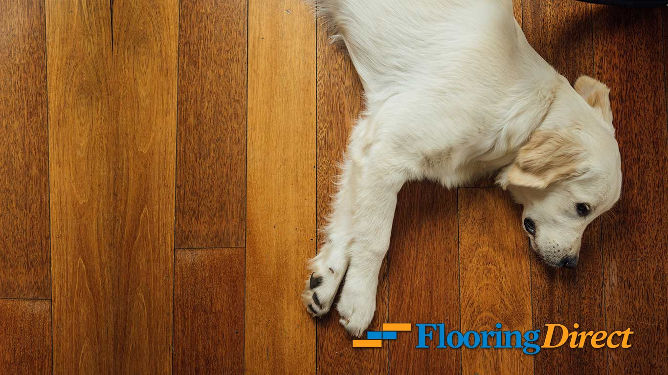 You're Not The Only One Who Loves Your New Flooring
