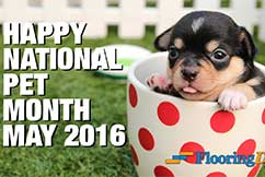 Happy National Pet Month May 2016